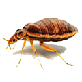 Trinity Pest Solutions - Bed Bugs - Miami, Florida