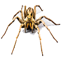 Trinity Pest Solutions - Spider Pest Control