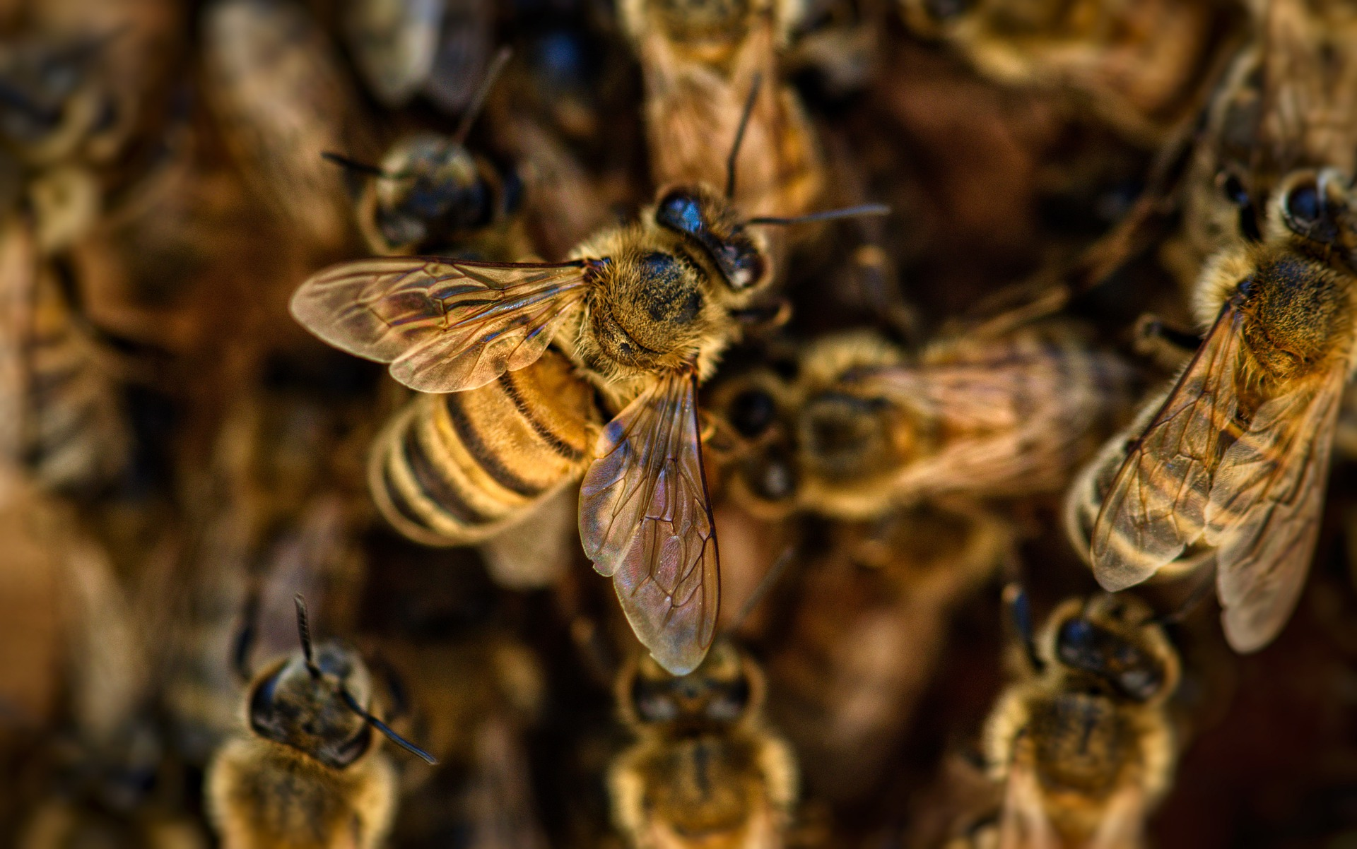 Trinity-Pest-Solutions-Bee-Control-Infestation